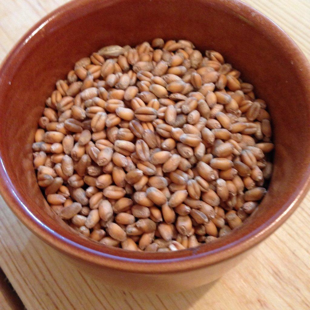 Pšenice ozimá BIO