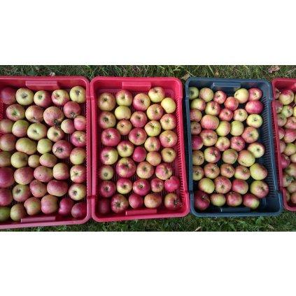 Domácí jablíčka